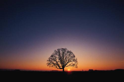 sun setting behind an oak tree