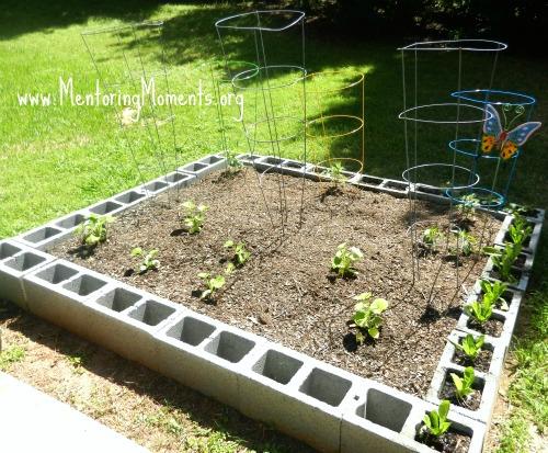 Vegetable garden made using cement blocks.