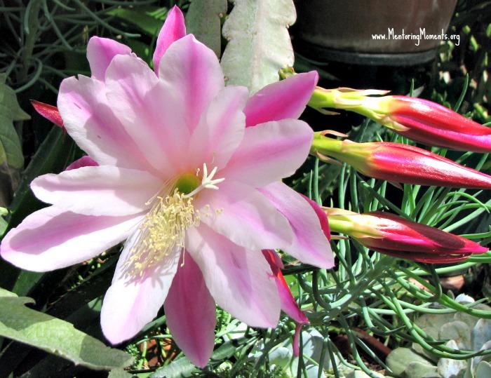 pink flower 23 / photo by Kellie Renfroe
