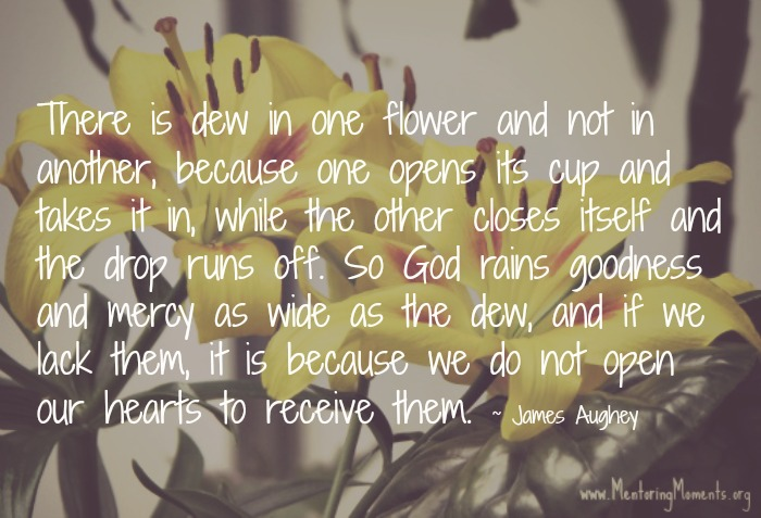Yellow flowers with James Aughey quote super imposed.