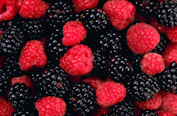 blackberries / image from Microsoft Publisher