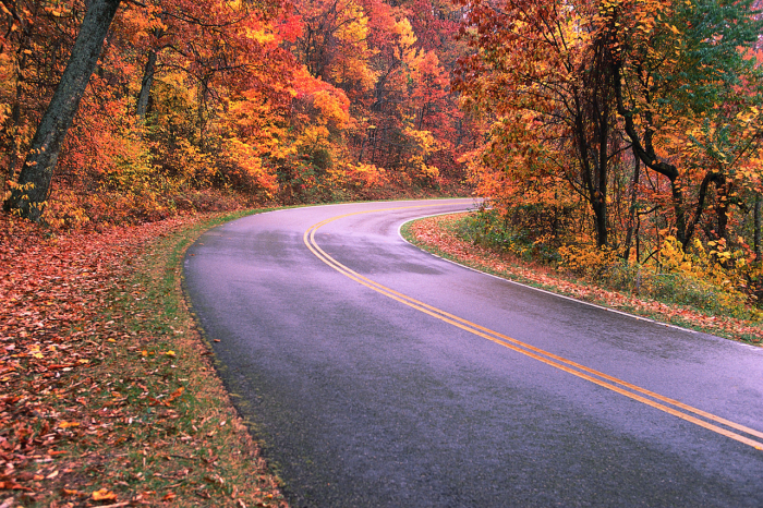 Winding road lined by trees in fall foliage.