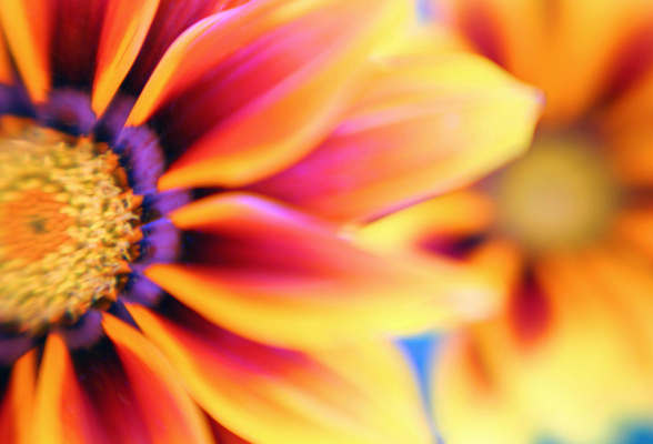 flower3-588_phixr