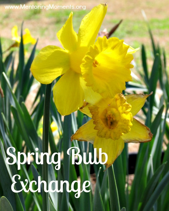 spring bulb exchange